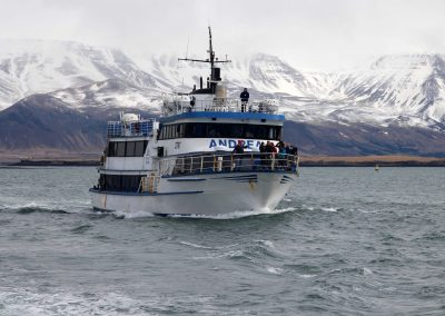 Whale watching via Special Tours *3h* 10.990 ISK