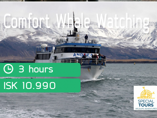 Whale watching via Special Tours