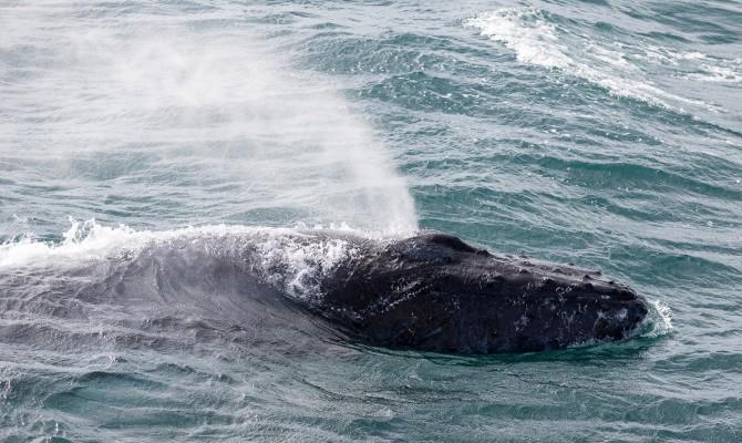 Reykjavik_Sailors_Whale_Watching_Tour_From_Reykjavik6